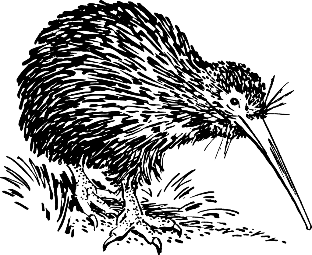 New Zealand KIWI - Unique like our Domain Names